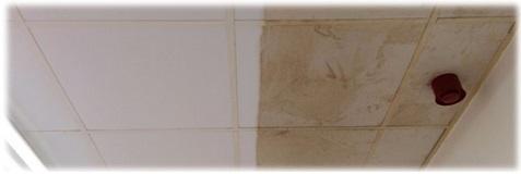 Limpieza de falsos techos - Vinilo